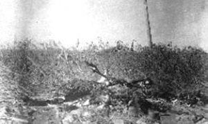 G-1771FF1.2-3 Body in grassy area