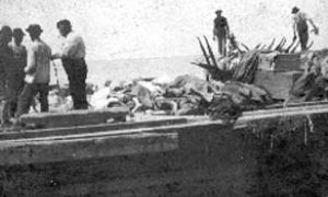 G-1771FF1.3-5 Loading bodies on barge to carry to sea