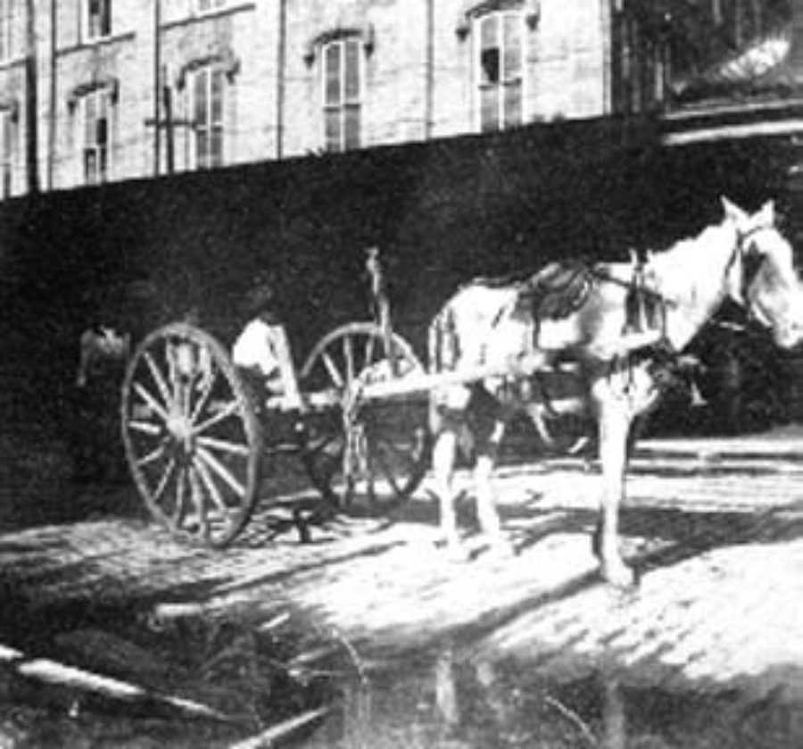 G-1771FF1.4-1 Horse hitched to cart for carrying bodies