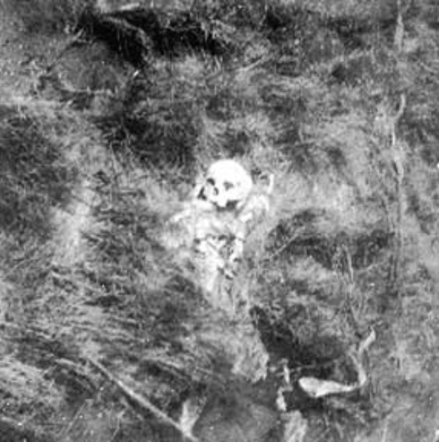 G-1771FF1.4-6 Skeletal remains lying amid brush
