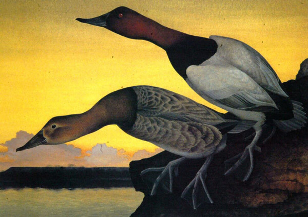 Of Birds and Texas: The Art of Stuart and Scott Gentling